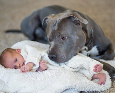 daughter pit bull story