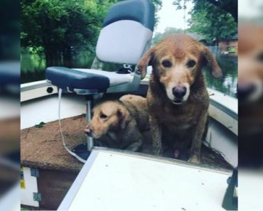 dogs rescued in boat