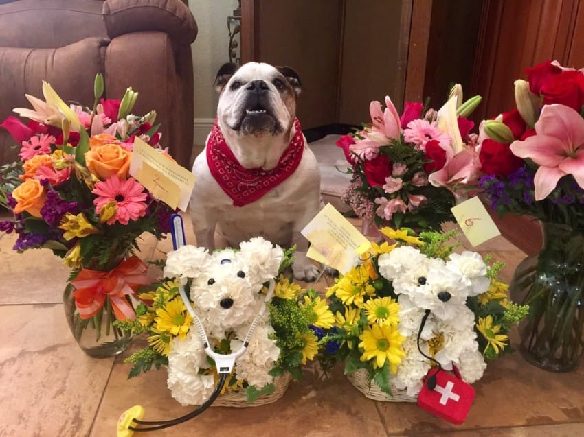 Wife Is Not Amused When Husband Sends Gorgeous Flowers Home But They ...