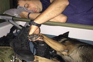 k9 officer holding hands with dog