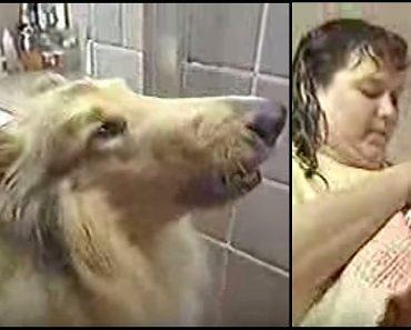 lassie saves baby