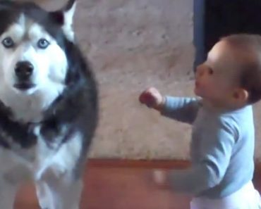 baby talking to dog