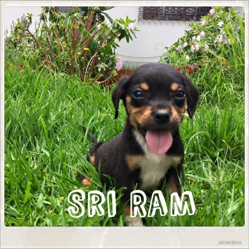 bernie and sri ram best friends