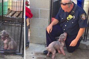 cop visits pit pup