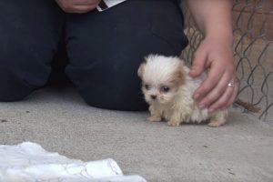 hold me closer tiny puppy
