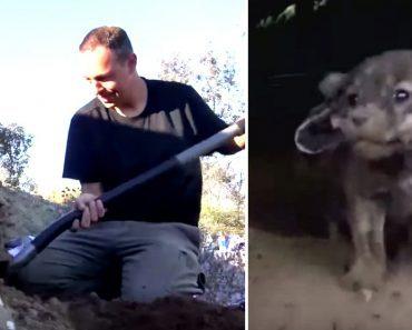 cave puppies rescue