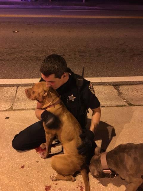 cop comforts pit bulls
