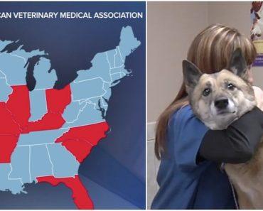 dog flu signs symptoms