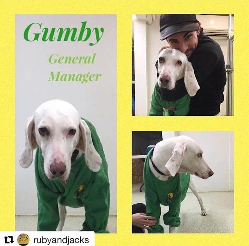 gumby shelter 11 times