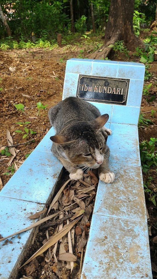 kitty wont leave grave