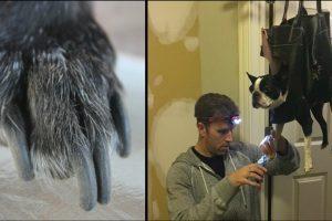 nail clipper dog grooming hack