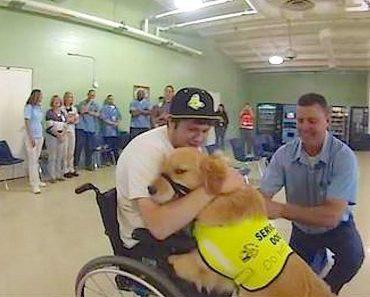 nick meets service dog