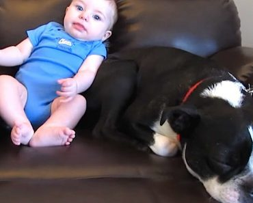 baby poop dog reaction