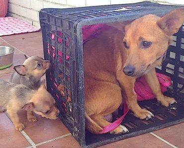 mama dog seven puppies