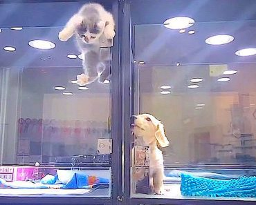 pet store puppy friend