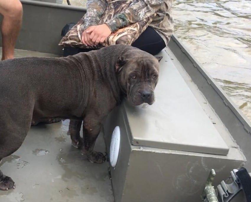 sadie dog rescue