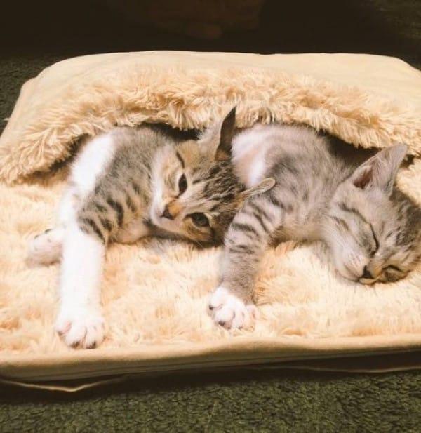 tora and saba find a foot warmer