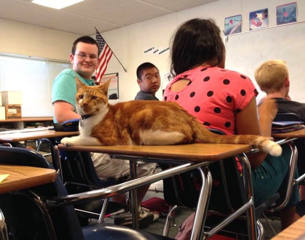 bubba the cat high school student