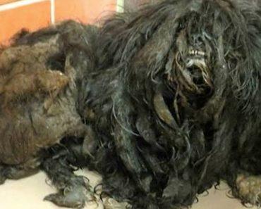 ellen dog transformation