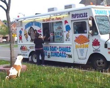 pit bull ice cream