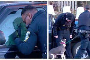 police rescue dog trapped