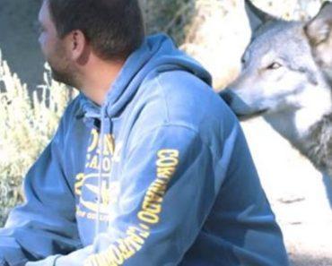 veterans wolves program