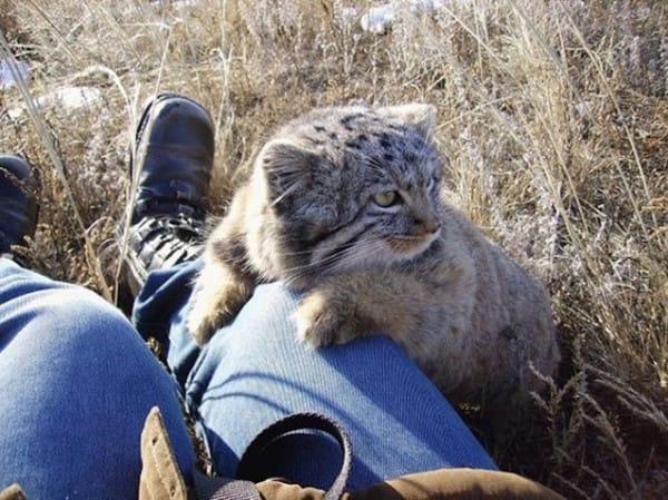 wildcat kittens in barn