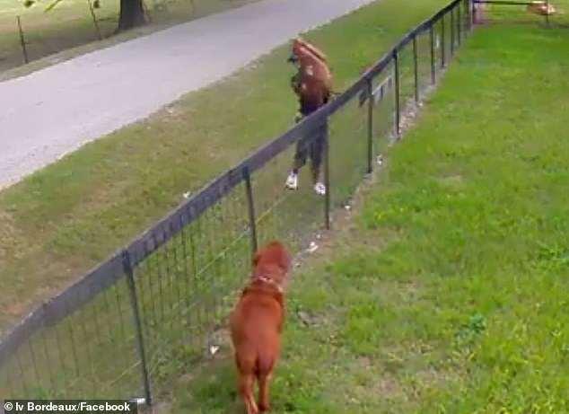 dognappers caught on surveillance