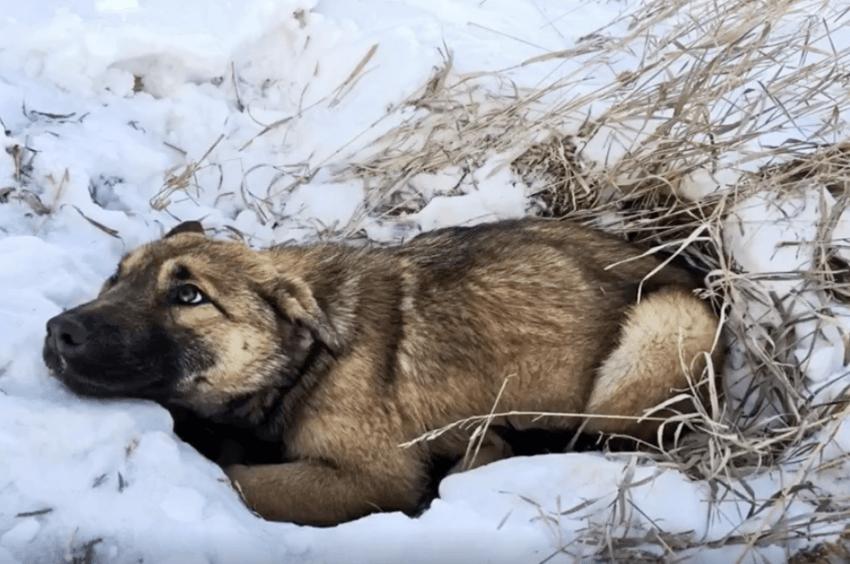 nutmeg puppy injured in snow