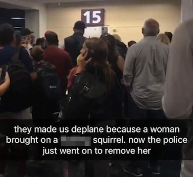 woman flying with emotional support squirrel
