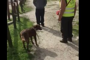 dog recognizes long lost owner