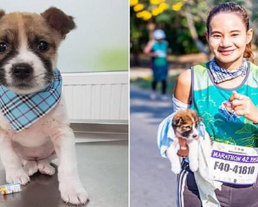 marathon runner carries dog