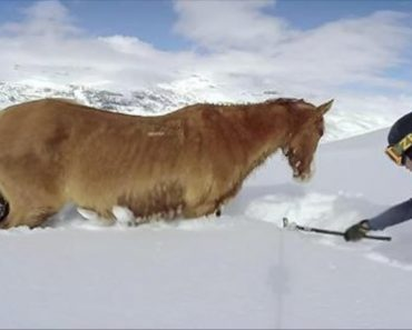 snowboarders save stranded horse
