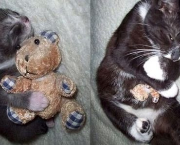 pets with toys
