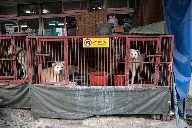dogs rescued korean meat market
