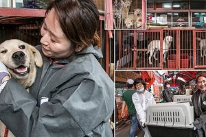 dogs rescued korean meat market