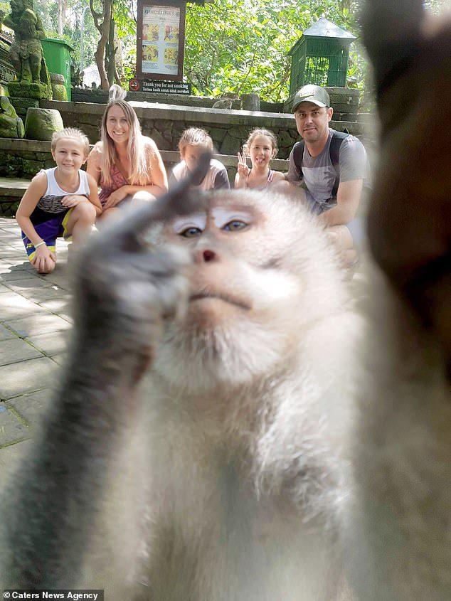 monkey selfie middle finger