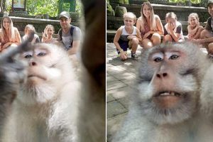 monkey selfie middle finger