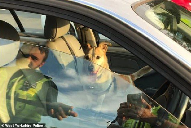 woman leaves dog hot car