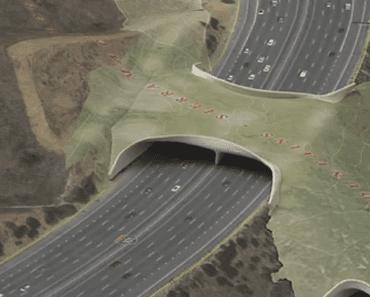california freeway bridge wildlife
