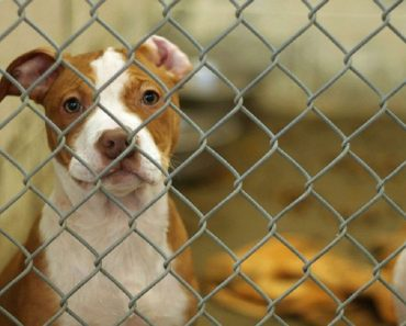 delaware no kill animal shelter