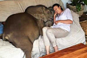 woman saves elephant