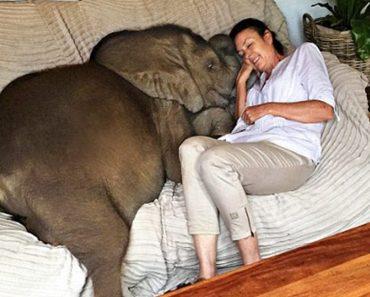 woman saves elephant