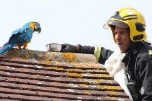 parrot curses fire crew