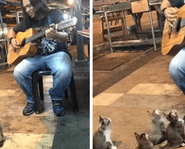 kittens support street singer