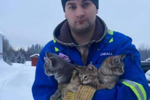 man rescues frozen kittens
