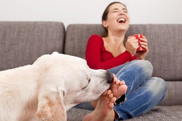 why do dogs lick your feet